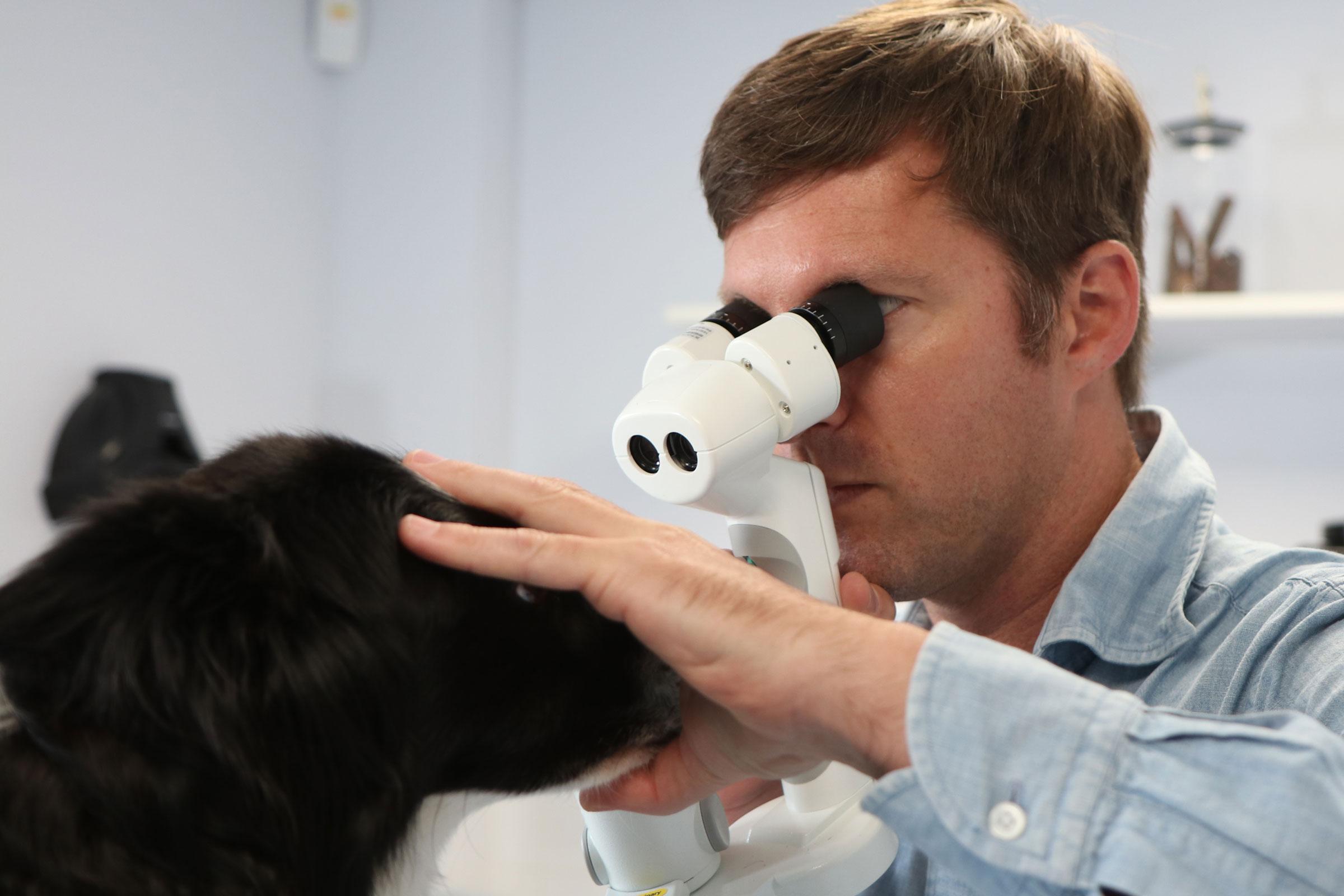 Ophthalmologist examining dog